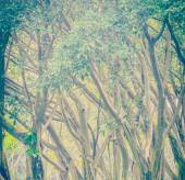 Roots tree — Stock Photo