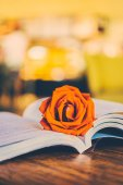 Rose on open book — Stock Photo