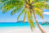 Coconut palm tree op tropisch strand — Stockfoto