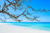 Hermosa playa tropical — Foto de Stock