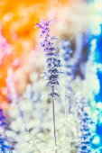 Soft focus on purple flower — Stock Photo