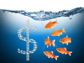 Fisch speculation concept — Stock Photo