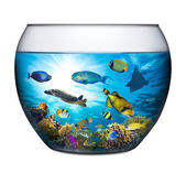 Coral reef fishbowl — Stock Photo