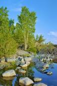 Birch on a stony shore of Ladoga lake — Stock Photo