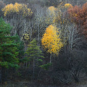 Colors of autumn forest — Stock Photo