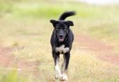 Black Street Dog — Foto de Stock