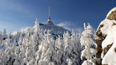 Frosted trees in the mountains — Foto Stock