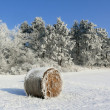 Winter and straw bales in the field — Stock Photo #61325313