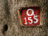Tree number — Stockfoto