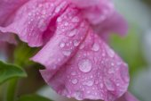 Дождевые капли — Stock Photo