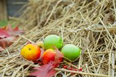 Ripe red apples on a hay — Stock Photo
