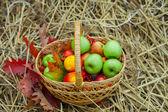 Basket with ripe apples on the hay — Stockfoto