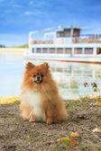 Pomeranian parapet quay on the background of yachts — Stock Photo