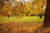 Golden leaves on branch, autumn wood with sun rays — Foto Stock