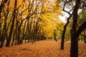 золотые листья на ветке, осенней древесине с лучами солнца — Стоковое фото