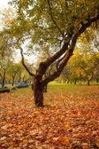 Dalı, güneş ışınları ile sonbahar ahşap altın yaprağı — Stok fotoğraf