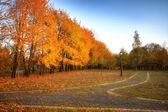 Fogli dorati su ramo, legno di autunno con i raggi del sole — Foto Stock