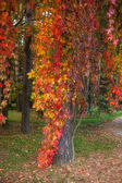 Autumn tree with yellow leaves in the park — Stock Photo