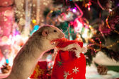 Decorative home rat on a background of Christmas decorations — ストック写真
