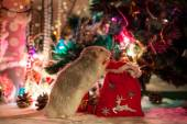 Decorative home rat on a background of Christmas decorations — Foto Stock