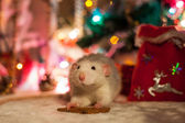 Decorative home rat on a background of Christmas decorations — 图库照片