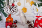 Decorative cute rat on a background of Christmas decorations — Foto Stock