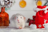 Decorative cute rat on a background of Christmas decorations — 图库照片