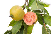 Two organic, biologic cultivated, guavas, one cut in half in a t — Stock Photo