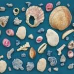 Marine life texture — Stock Photo #66598273