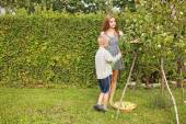 Brother and sister harvesting — Stock Photo