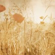 Vintage corn field with poppies in soft sepia effect — Stock Photo #57892633