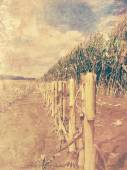Retro corn field - arable land picture with old photo effect — Stock Photo