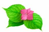 Spa Concept pink Flower with Green Leaf — 图库照片