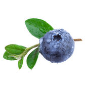 Close up of a Blueberry with water droplets and leaves — Stock Photo