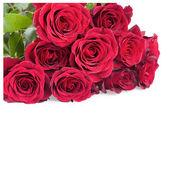Hi-tech γενιά白で隔離される赤いバラの花 — ストック写真