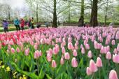 KEUKENHOF GARDEN, NETHERLANDS - APRIL 08: Keukenhof is the world's largest flower garden with 7 million flower bulbs on an area of 32 hectares. Keukenhof Garden, Lisse, Netherlands - April 08, 201 — Stock Photo