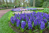 KEUKENHOF GARDEN, NETHERLANDS - APRIL 08: Keukenhof is the world's largest flower garden with 7 million flower bulbs on an area of 32 hectares. Keukenhof Garden, Lisse, Netherlands - April 08, 2014. — Stock Photo