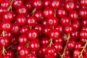 Redcurrant background close-up — Stock Photo