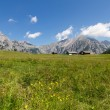 Mountain landscape in the Alps with flowers meadow. Austria, Walderalm. — Foto Stock #79025612