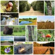 Collage of nature photos — Stock Photo #71025035