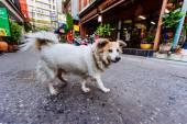 Cane senzatetto — Foto Stock
