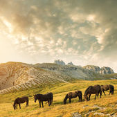 Mountain landscape with horses — Stock Photo