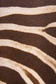 Brown striped zebra fur imitation — Stock Photo