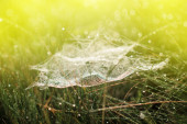 Magic cobweb in dewy grass — Stock Photo