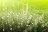Magic cobweb in dewy grass — Stock Photo