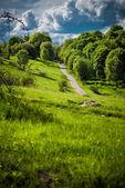 Cesta jde do kopce mezi stromy. — Stock fotografie