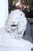 Marble lion. — Stock Photo