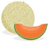 Cantaloupe melon — Stock Vector