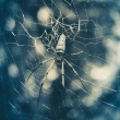 Large tropical spider in the web — Stock Photo #52793311