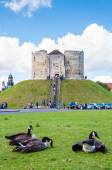 Tourists and wildlife in front of Clifford's Tower, York, England. — Stock Photo